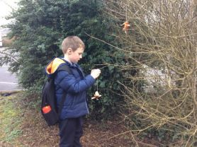 Making birdfeeders and bird watching